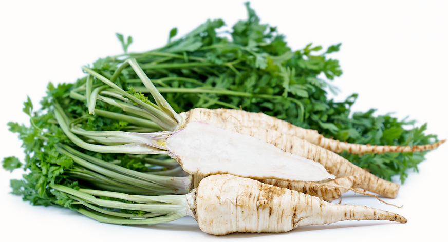 Parsley Root Information, Recipes and Facts