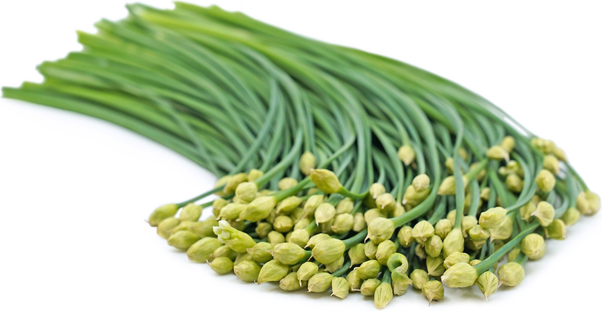 Garlic Chive Buds Information, Recipes and Facts