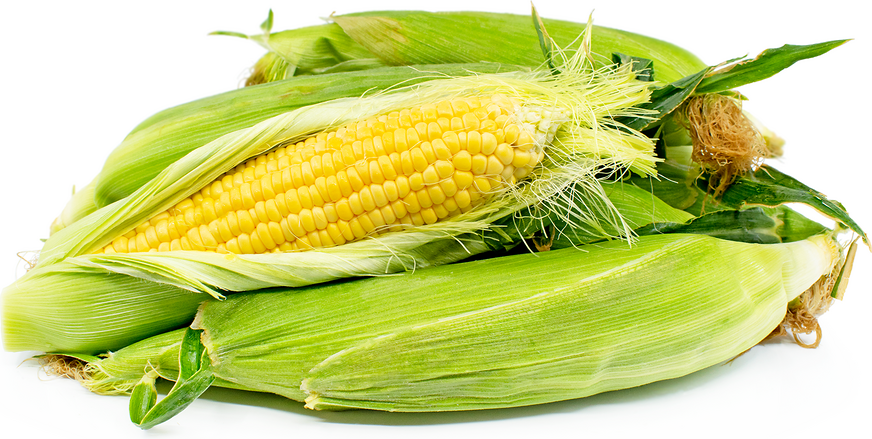 corn mature singles Feed costs have been identified as the largest single cost of livestock  to aid in controlling livestock, corn could be  assume a mature corn field .