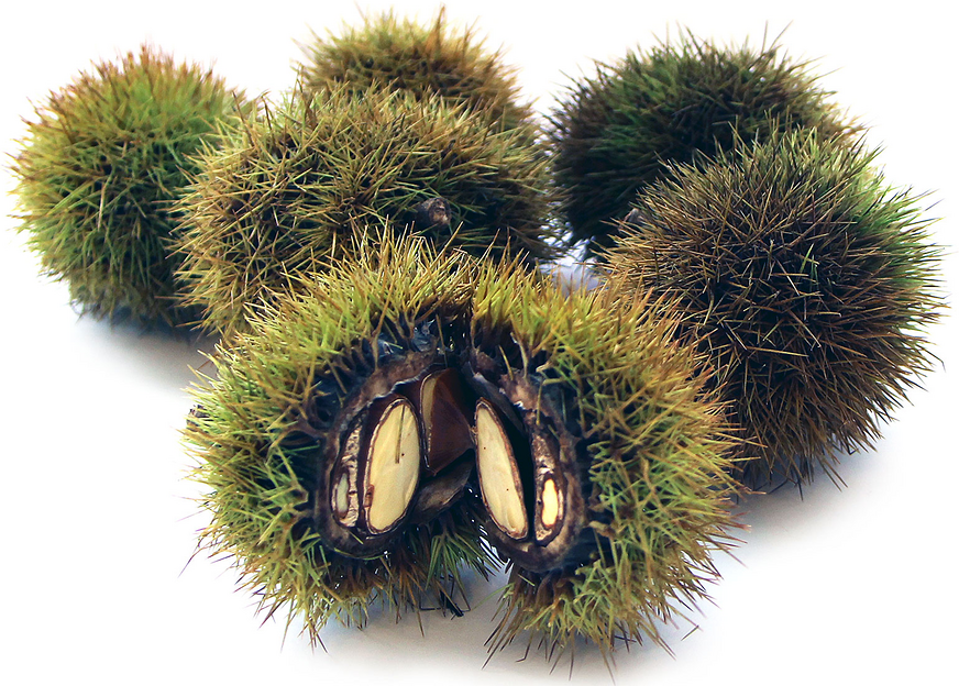 Japanese Chestnuts picture