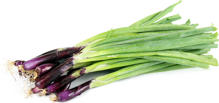 Red Tip Scallion picture