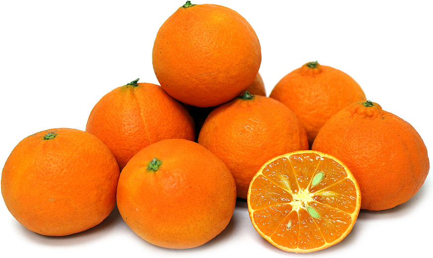 Clementine Tangerines picture