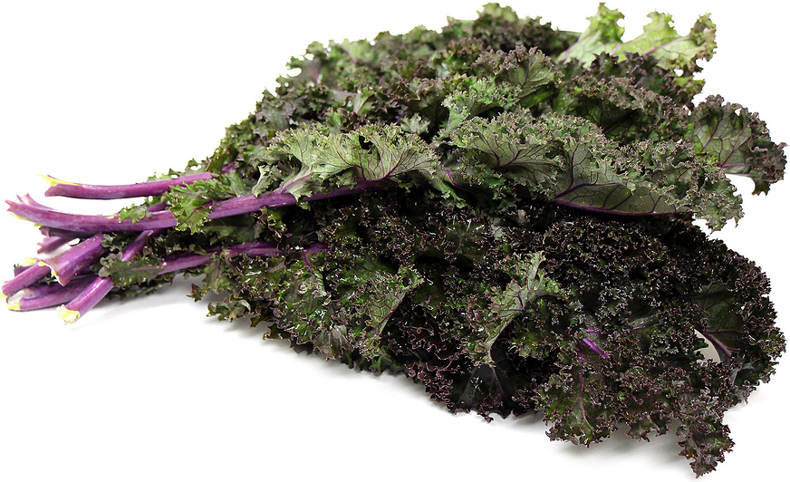 Red Russian Kale picture