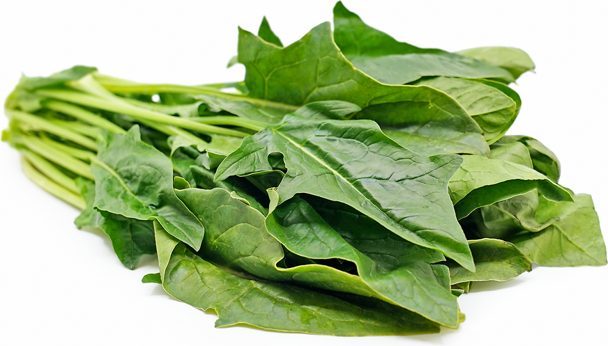 Arrowhead Spinach Information, Recipes and Facts