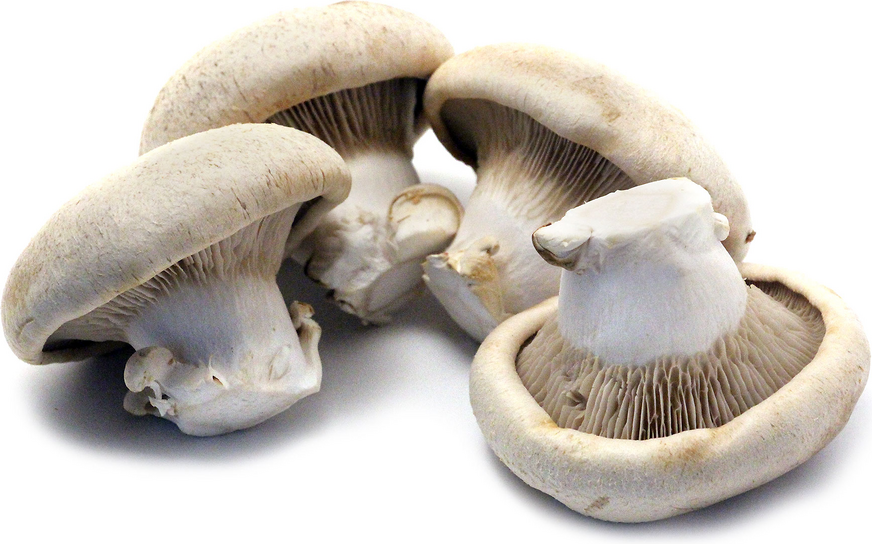 Shirakami Awabitake Mushrooms