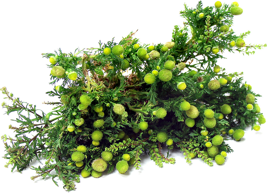 Pineapple Weed picture
