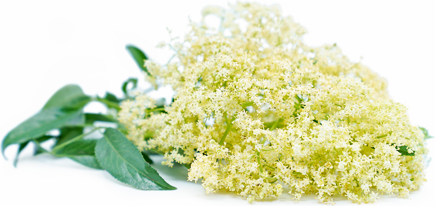 Elderflowers picture