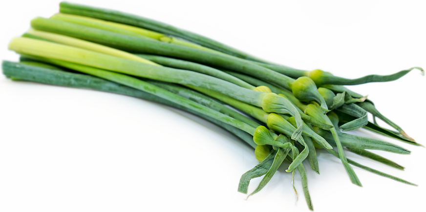 Leek Scapes picture
