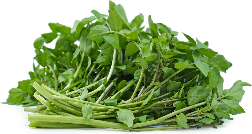 Foraged Wild Watercress