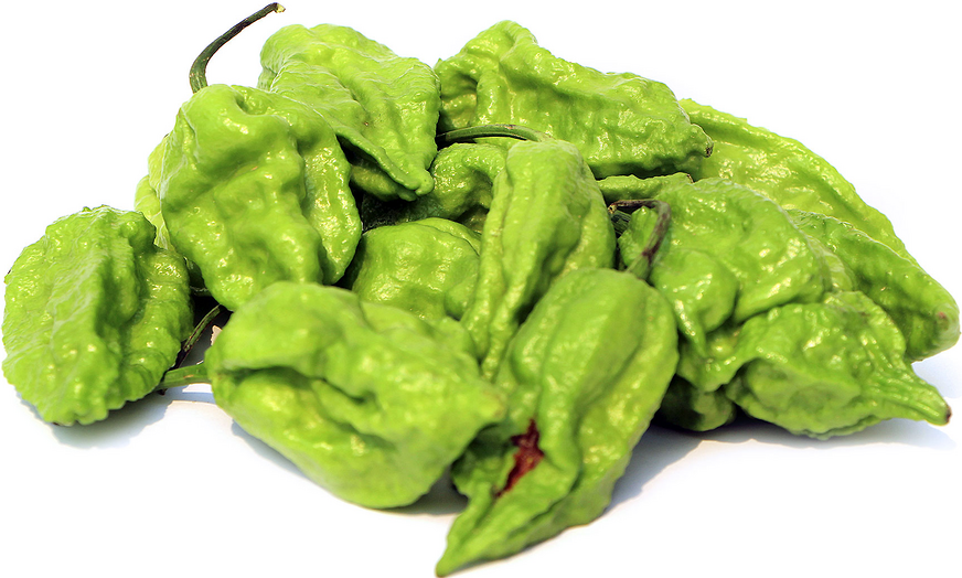 Raja Mirchi Chile Peppers