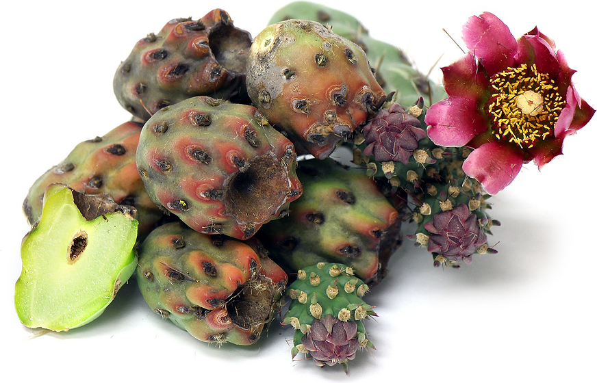 Cholla Cactus Buds Information, Recipes and Facts