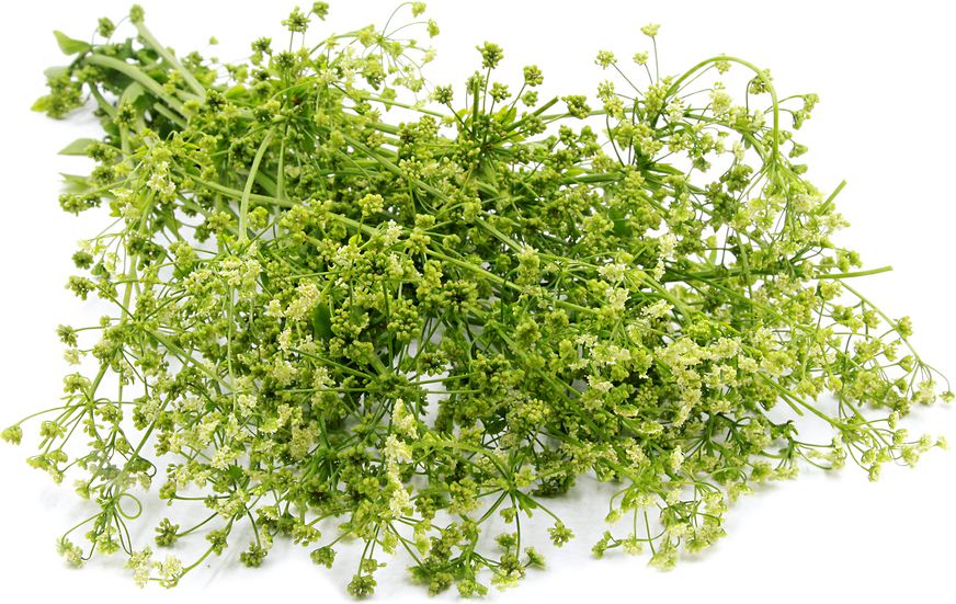 Parsley Blossoms