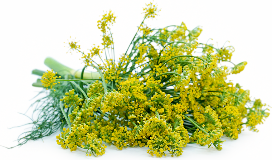 Dill Blossoms