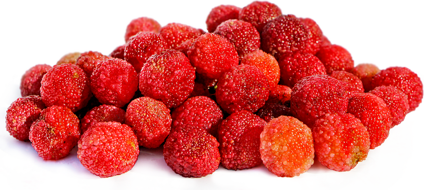 Red Bayberries