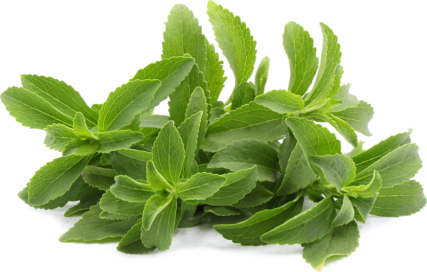 Stevia picture