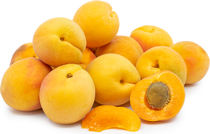 Blenheim Apricots picture