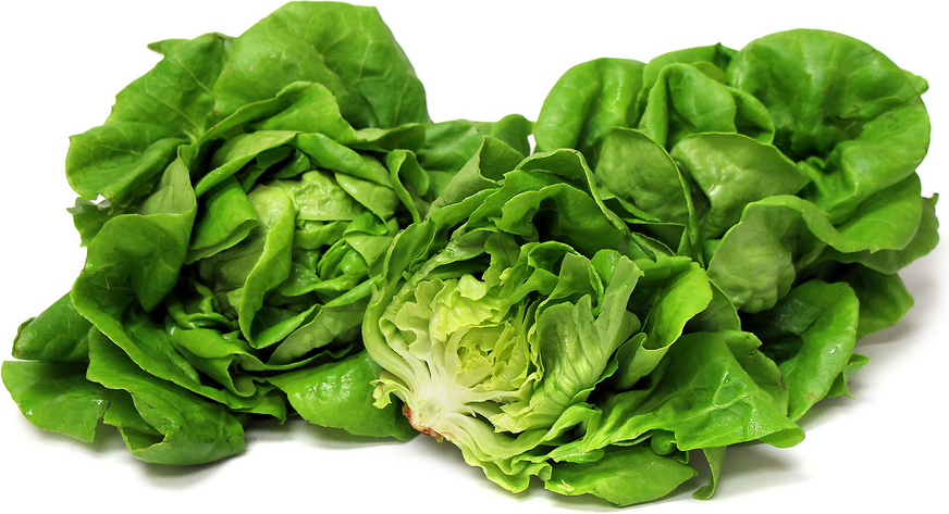 Hydro Green Butter Lettuce picture