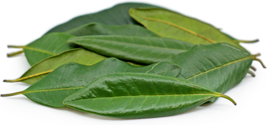 Allspice Leaves