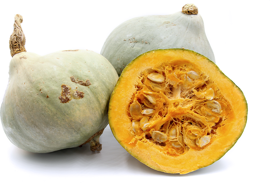 Blue Hubbard Squash Information, Recipes and Facts