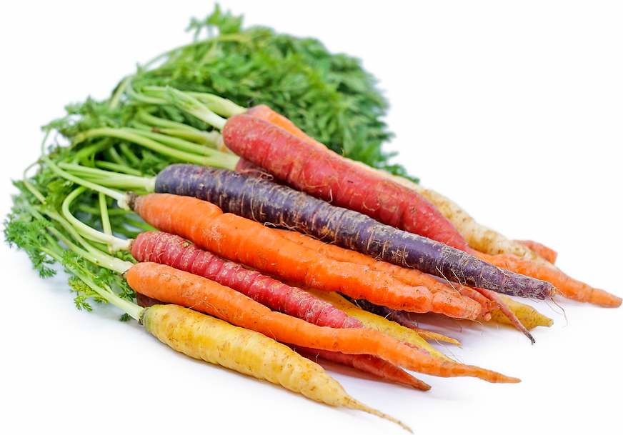 Rainbow Bunch Carrots picture
