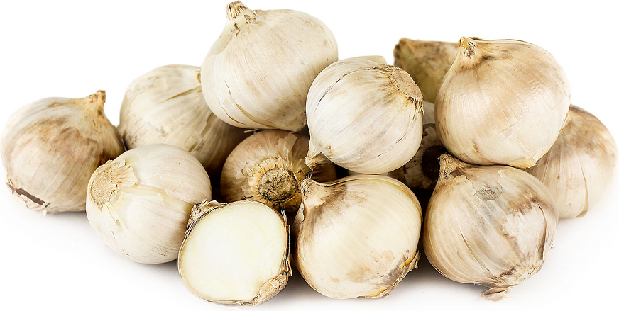 11 Garlic drawing colouring download clip arts on Free