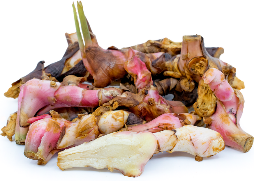 """Image result for galangal"""""""