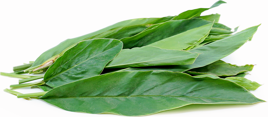 Galangal Leaves