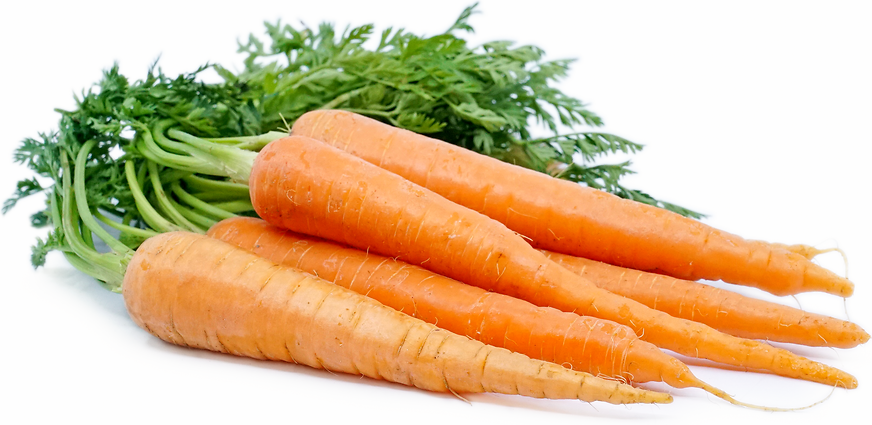 Bunched Carrots picture