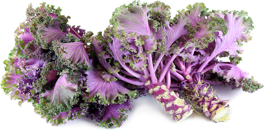 Chidori Kale Information And Facts