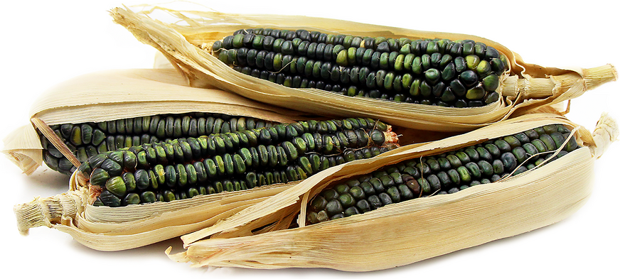 Oaxacan Green Dent Corn picture