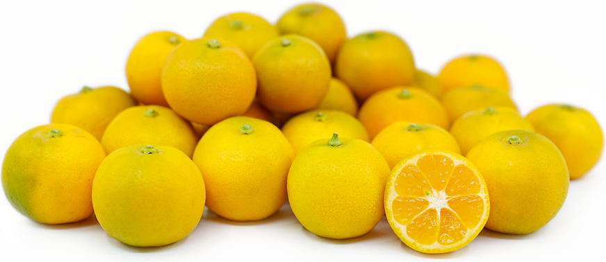 Link to Calamondin Limes