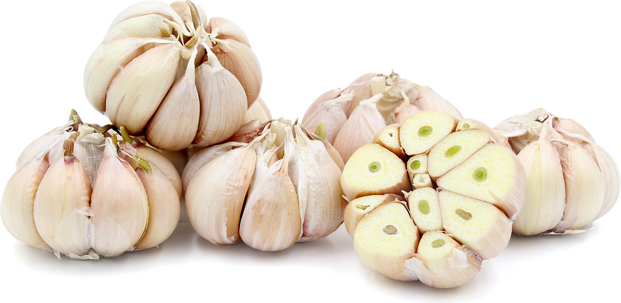 Sonoran Garlic
