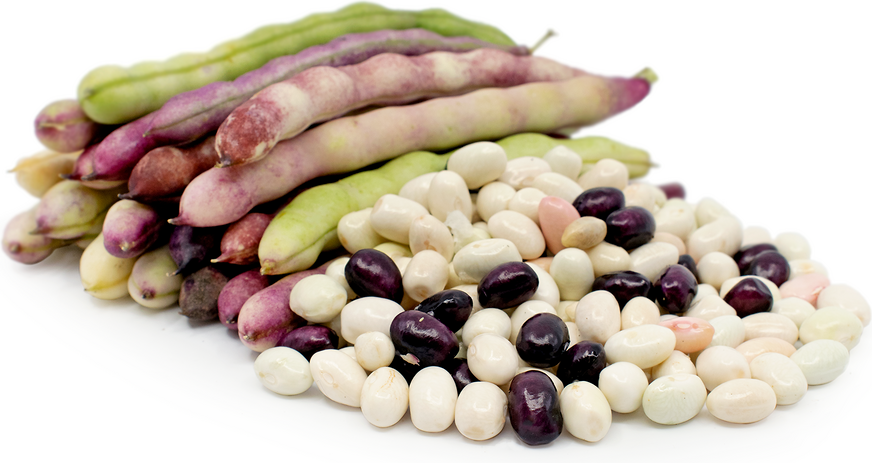 Oaxacan Shelling Beans picture