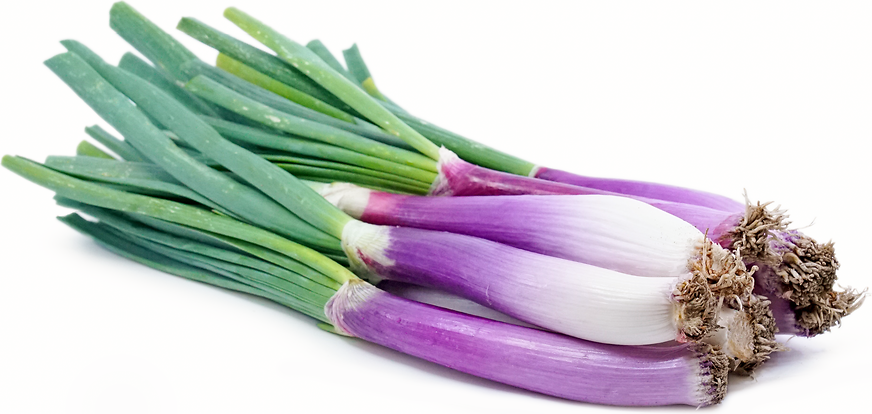 Red Calcot Onions