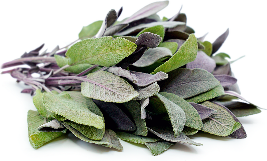Purple Sage Information, Recipes and Facts