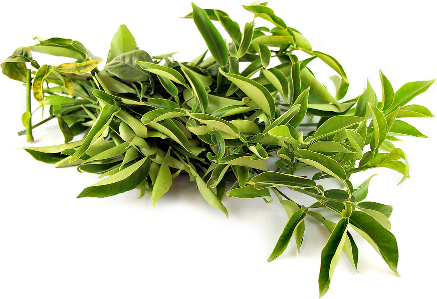 Yuzu Lime Leaves picture