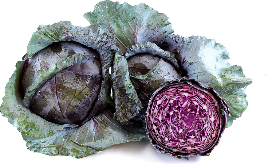 Red Cabbage picture