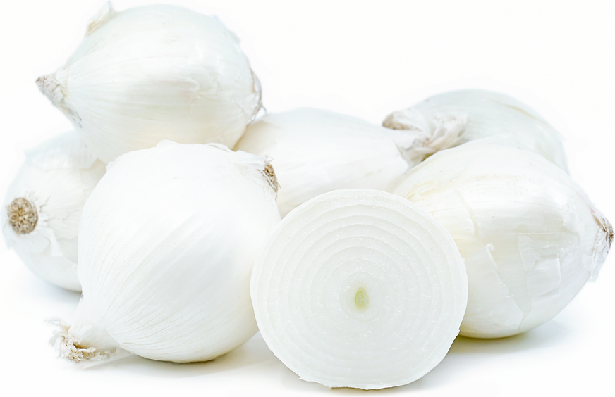 white onions information recipes and facts