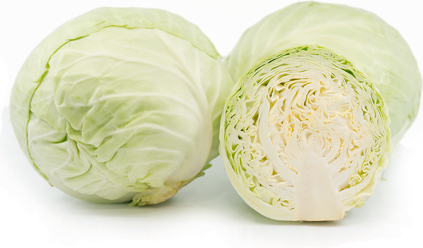 Organic Green Cabbage picture