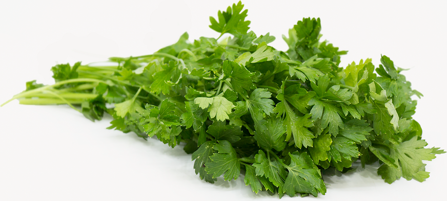 Organic Italian Parsley picture