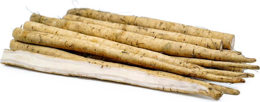 Burdock Root (Gobo)