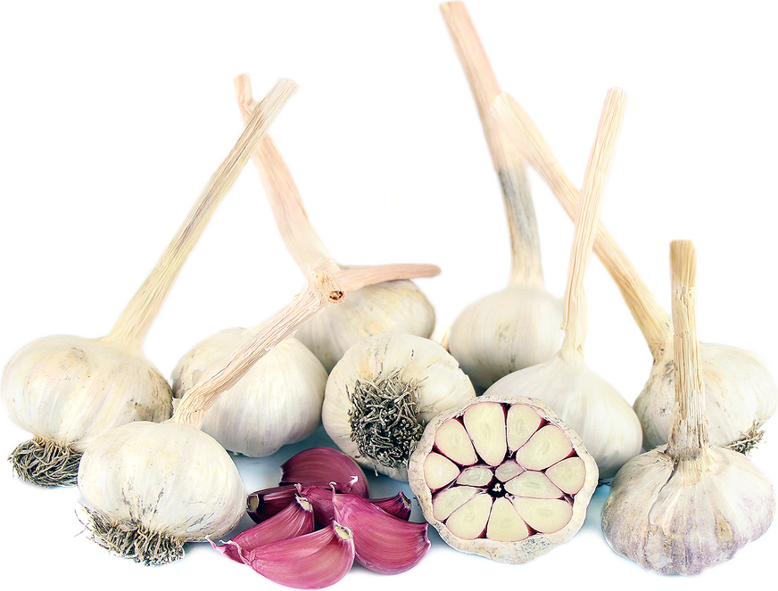 Red Sulmona Garlic