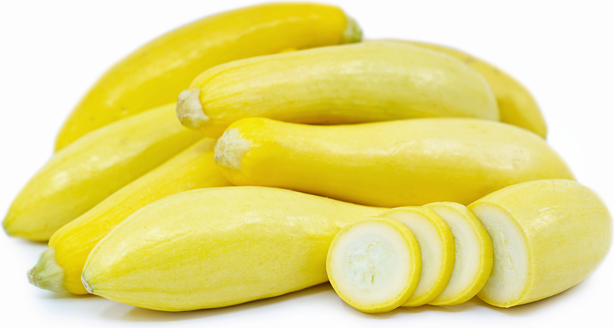 Yellow Crookneck Squash picture