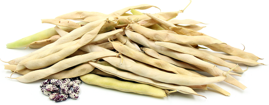 Peruano Shelling Beans picture