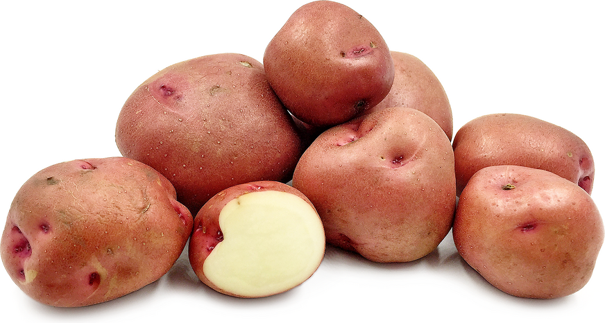 Red Bodega Potatoes picture
