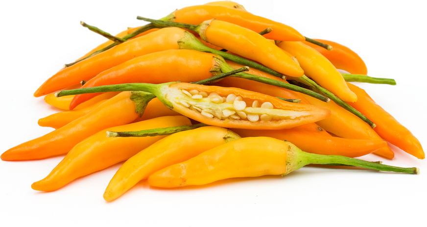 Thai Orange Chile Peppers picture