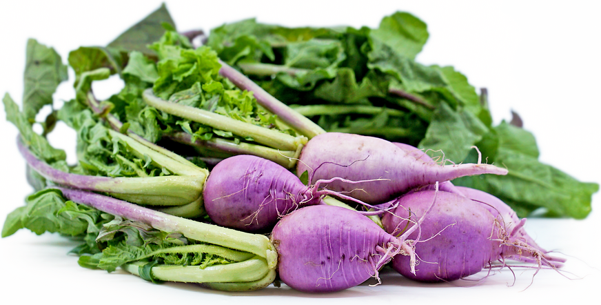 Purple Ninja Radishes