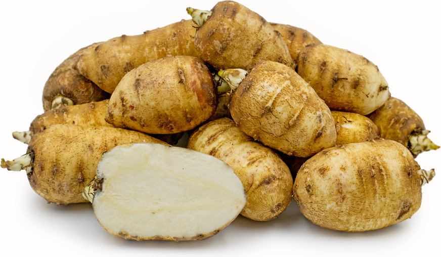 Chervil Root picture