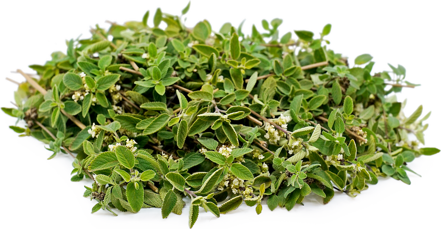 Mexican Oregano picture