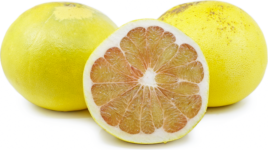 African Shaddock Pomelo